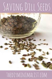 Saving Dill Seeds - The DIY Minimalist (1)